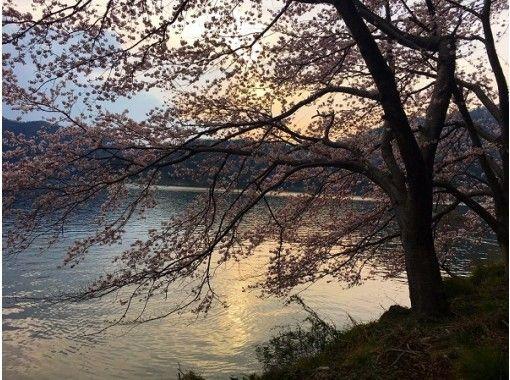 【夜桜カヤック】桜×ライトアップ! 水月湖・夜桜コースの紹介画像