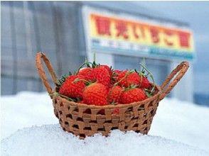【山形県・寒河江市】雪中いちご狩り体験と若返りの寺「慈恩寺」で精進料理の昼食バスツアー