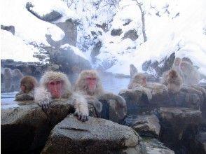 東京的壽喜燒午餐與雪猴之旅