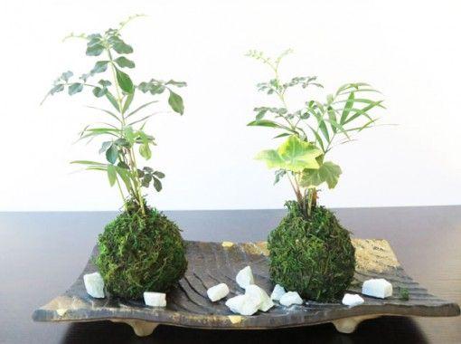【埼玉・さいたま市】涼しげな落ち着く苔玉作りの紹介画像