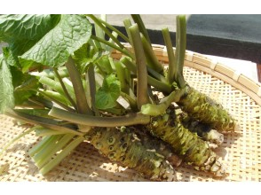 [Yamagata Okura Village] Why don't you try Okura Wasabi (snowflower) processing experience & all wasabi dishes raised in the spring water of Gassan?