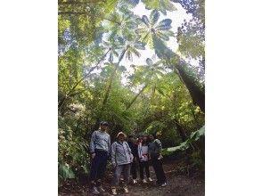 金作原とマングローブ原生林を巡るSUP &カヌー‼️奄美の森1DAYプラン