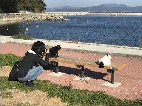 "[Miyagi Prefecture, Ishinomaki] 2 days and 1 night tour of the island of Cat Island ""Tashirojima"" and the mysterious island ""Kinkasan"""