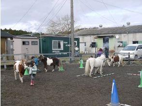 【三重・北勢で乗馬体験】お子様の初挑戦に!ポニースクール体験コース(3~9歳までのお子様)の画像