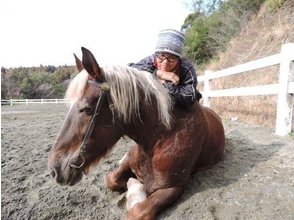 【宮崎・リハビリにも!】引き馬 ホースセラピー(15分コース)の画像