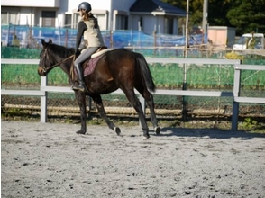 【三重・北勢で乗馬体験】乗馬教室・お手軽体験コースの画像