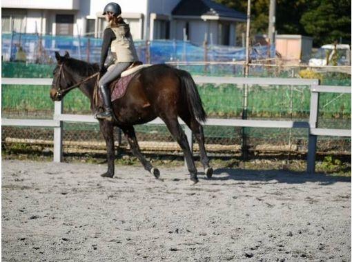 【三重・北勢で乗馬体験】乗馬教室・お手軽体験コースの紹介画像