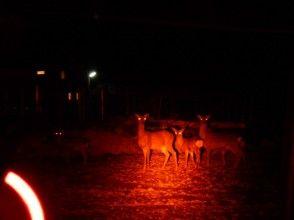 ★見れなかったら返金CP 野生の鹿観察会in西湖
