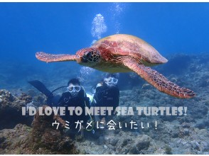 [Yakushima experience diving] I want to meet my longing sea turtle! Special 1 dive course that raises the sea turtle encounter rate by diving longer!
