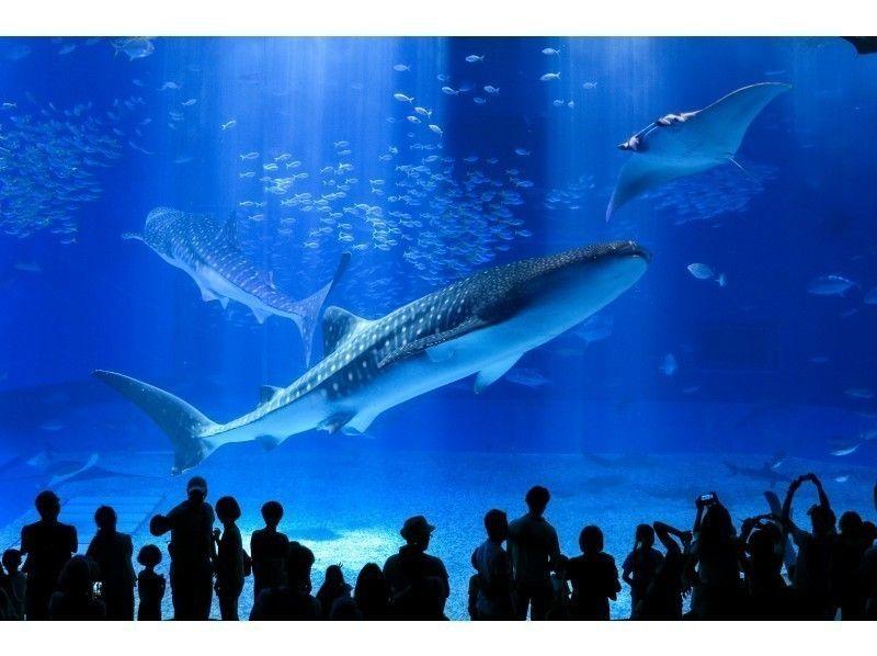 美 ら 海 水族館