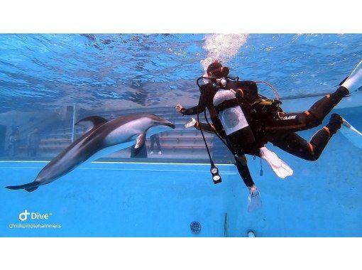 【伊豆・下田】日本初・プールでカマイルカと泳ぐドルフィンダイビング【未経験者OK・所要時間約2時間】の紹介画像