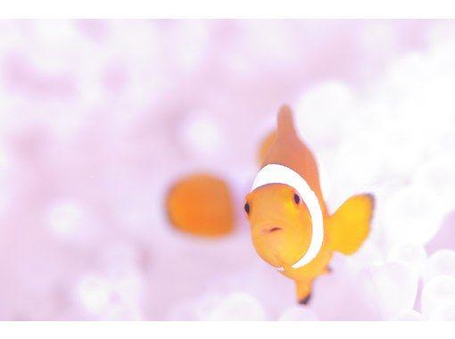 【北谷町/送迎OK】★2ビーチファンダイビング★の~んびりと、水中世界を満喫!【少人数制・初心者さん歓迎・到着日OK】の紹介画像