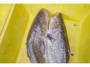 【Iwate】Fish Market Adventure