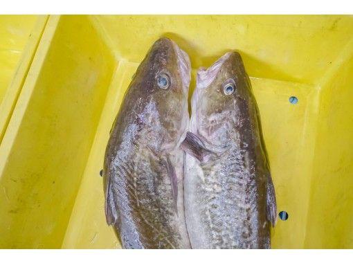 【Iwate】Fish Market Adventureの紹介画像