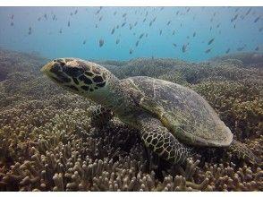 [北出发/偏远岛屿] Minna Island Waku Waku浮潜2包&一日游海上沐浴之旅