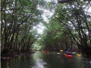 【沖縄・西表島】応援プライス!2.マングローブの川カヌー体験クーラの滝つぼ午前半日、写真データ、軽食付き