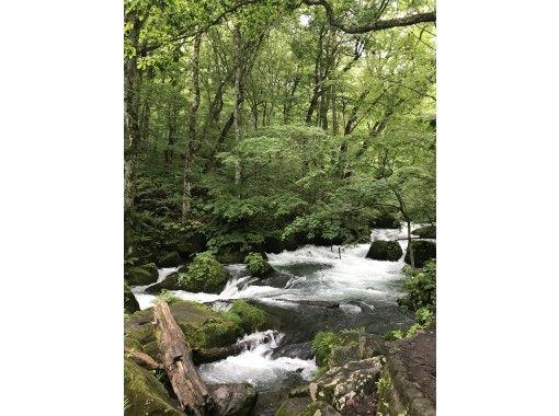 【絶景!!】自然の音が聞こえる『焼山から十和田湖までの奥入瀬渓流セルフウォーキングツアー』