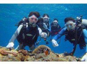 【沖縄本島・慶良間・チービシ】体験ダイビング 2ボートの画像