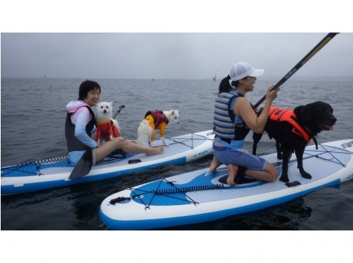 """Complete one-on-one private (per person), with SUP test grade 4 """"SUP enjoy master plan (about 2 hours)""""の紹介画像"""