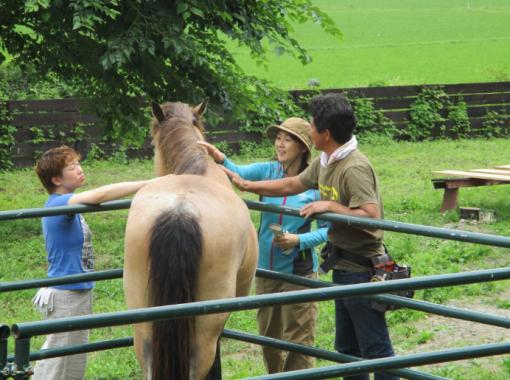【宮城・東松島】海街さんぽオリジナル 大人向け牧場体験プログラム 動物好きな方、牧場ライフにご興味のある方におすすめ!