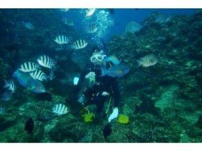 【沖縄 北谷・恩納方面】体験ダイビング 1ビーチの画像
