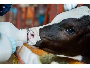【10月~5月限定】【1日1組限定】酪農フルコースで食育体験~乳しぼり・ミルクやり・バター作り@宮崎