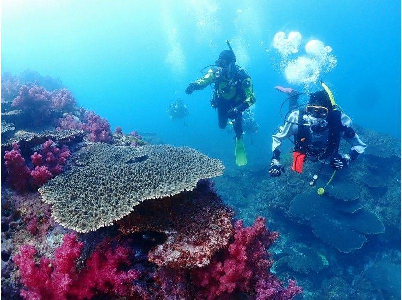 [Miyazaki / Nobeoka] Impressive scuba Diving experience in tropical Miyazakiの紹介画像