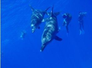 [Dolphin swim & watching half-day tour] Swim with wild dolphins! Impressive half-day Tour ★ Snorkeling included