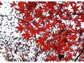 【期間限定】天城山の紅葉は今が最高潮!紅葉トレッキングツアー