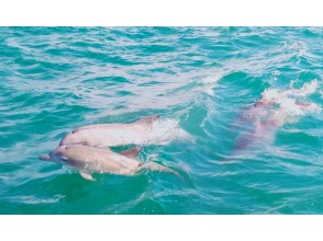 [Kumamoto / Amakusa City] Let's meet wild dolphins! Meet a herd of about 200 Southern Dolphins regardless of the season!