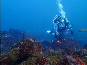 [Izu Peninsula beginner welcome] sea diving