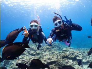 고리라 톳에서 전세 체험 다이빙! 초보자 대환영 [오키나와 본부] Gopro 사진 & 먹이 무료! 2 명 이상