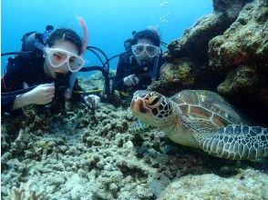 初學者專業潛水學校齊聚一堂