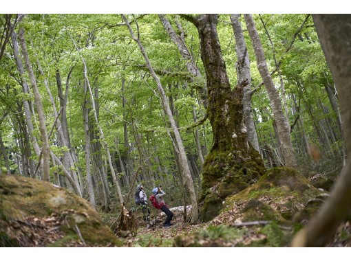 【秋田県・白神山地】奥白神のパワースポットで渓流と不屈の天然杉に出会う特別体験プログラムツアー