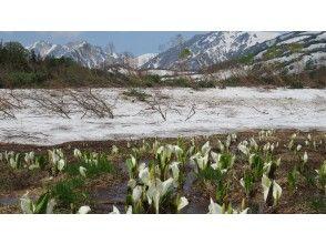 【小谷・長野】花の栂池自然園フラワーウォーキング