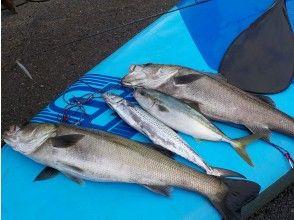 【神奈川・三浦海岸】supで釣りを楽しんじゃお!