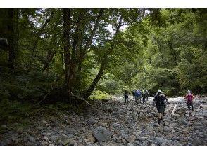 【秋田県・白神山地】完全に保全された白神山地遺産コアエリアから 流れる粕毛川を歩くリバートレックツアー