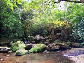 [J-2] Iriomote waterfall-sawanobori, cave exploration (full course) ☆ winter course ☆ of image