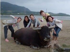 【沖縄・西表島】応援プライス!7.カヌー体験クーラの滝つぼ&水牛車観光1日、写真データ、昼食付き