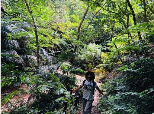 【沖縄・恩納村】亜熱帯植物が生い茂る森へ森林浴セラピーヨガ