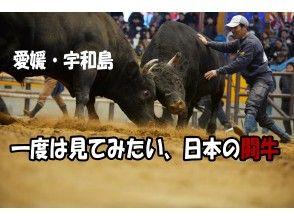 【愛媛・宇和島】夏だ!お盆だ!おうちで楽しむ!「オンライン闘牛ツアー」
