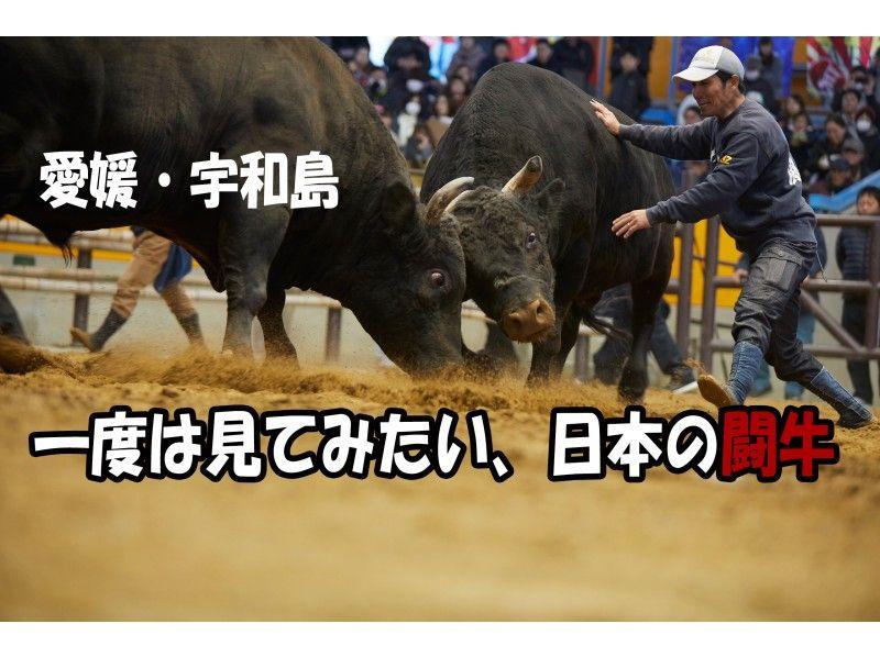 【愛媛・宇和島】丑年だよ!初心者向けおうちで闘牛!知られざる世界が楽しすぎる「オンライン闘牛ツアー」の紹介画像