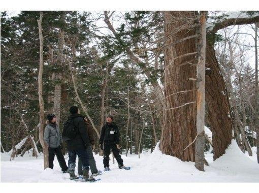 【北海道・知床】知床半島の断崖を一望できる「原生林スノーシュートレッキング」(半日)