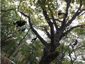 【群馬・前橋・赤城山】赤城山でツリーイング体験!大自然の中でBBQ、クラフト・釣りの選択体験つきプラン