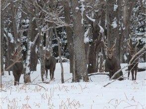 【知床・雪山ツアー】冬の動物ウォッチングの画像