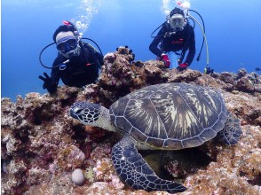 【沖縄・石垣島】1日体験ダイビング!マンタ・ウミガメ・ニモに会いに!シュノーケル付き器材無料(7時間)無料で釣りやサップもコロナ感染対策実施