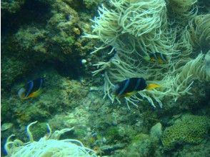 [Yakushima] crystal clear Yakushima sea snorkeling tour of the image