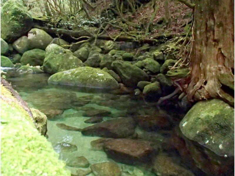 【屋久島】神秘の森トレッキングツアー【一日】の紹介画像