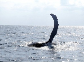 【沖縄・本部発】迫力満点!美ら海 ホエールウォッチングの画像