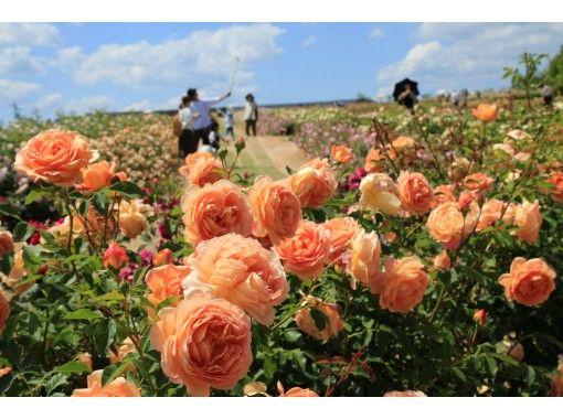 【広島県・世羅町】広島再発見クーポンで最大半額!秋のローズフェスタ&りんご狩り体験パック